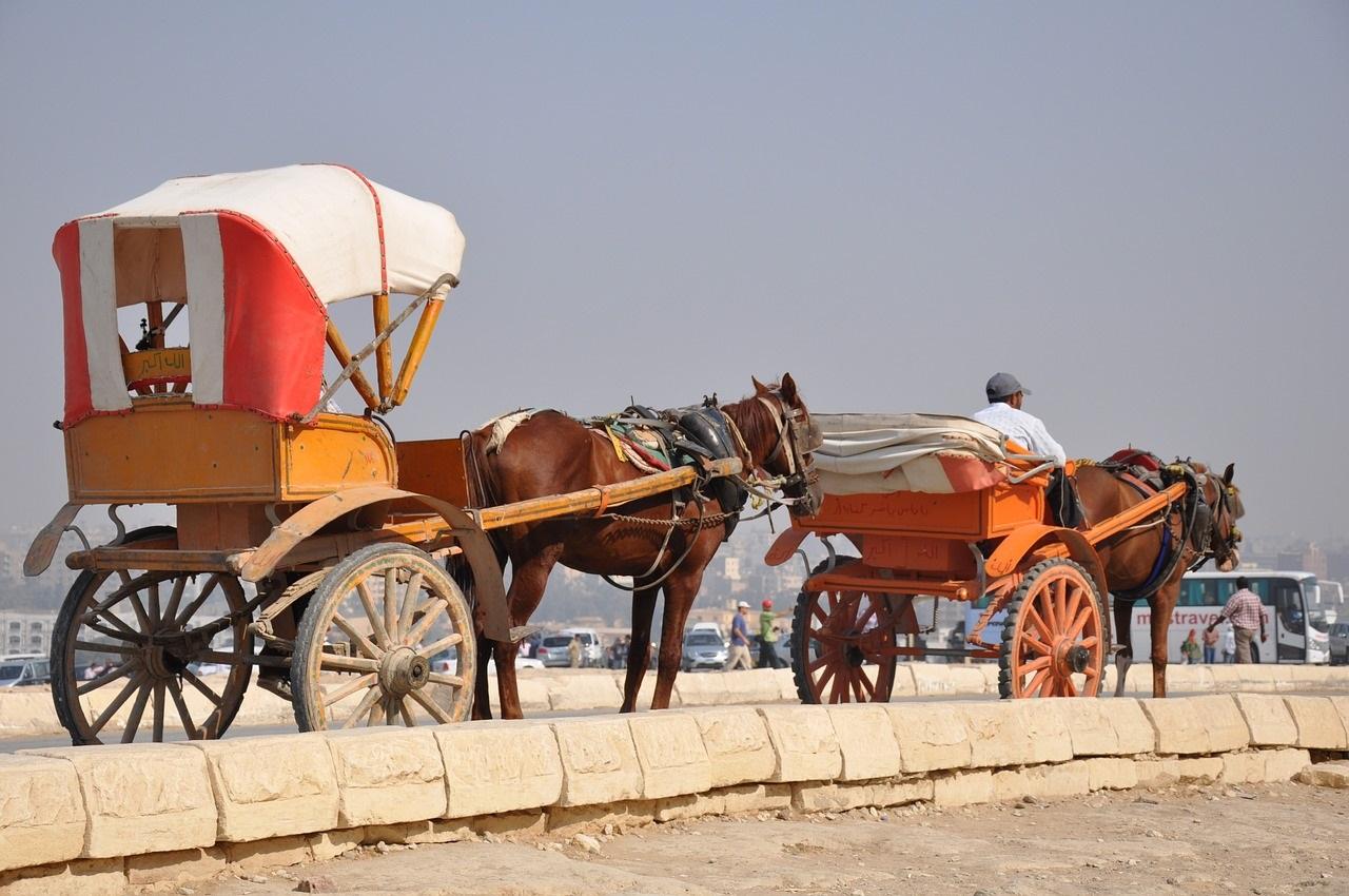 Comment atteler des chevaux en paire ?